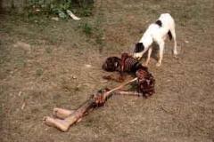 02-1984bodydogdelhiriots